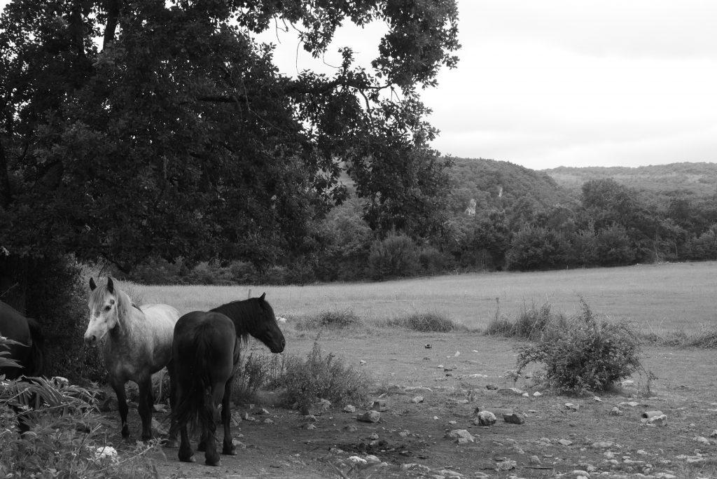 des chevaux sur le site