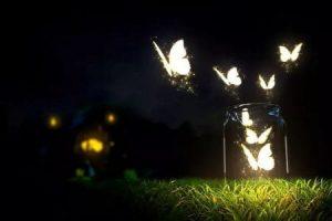 Un nous papillonant amoureux